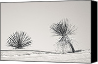 Crystals Canvas Prints - yucca in White sands Canvas Print by Ralf Kaiser