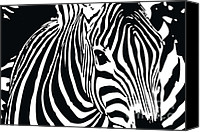 Horses Mixed Media Canvas Prints - zebra-01A Canvas Print by Eakaluk Pataratrivijit