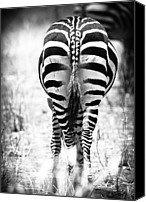 Monochrome Canvas Prints - Zebra Butt Canvas Print by Adam Romanowicz