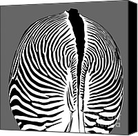 Silver Canvas Prints - Zebra Butt Canvas Print by Dave Gordon