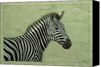 Drawing Canvas Prints - Zebra Canvas Print by James W Johnson