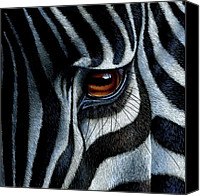 Jurek Zamoyski Canvas Prints - Zebra Canvas Print by Jurek Zamoyski