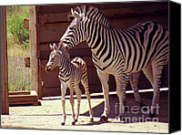 2hivelys Art Canvas Prints - Zebra Mom and Baby Canvas Print by Methune Hively