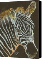 Zebra Pastels Canvas Prints - Zebra Yearling Canvas Print by Stephanie L Carr