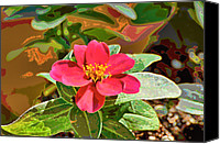 Zinna Canvas Prints - Zinna photoart Canvas Print by Debbie Portwood