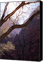 Minutes Photo Canvas Prints - Zion. 5 Minutes Before Spring Canvas Print by Viktor Savchenko