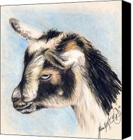 Goat Drawings Canvas Prints - Zoey The Goat Canvas Print by Scarlett Royal