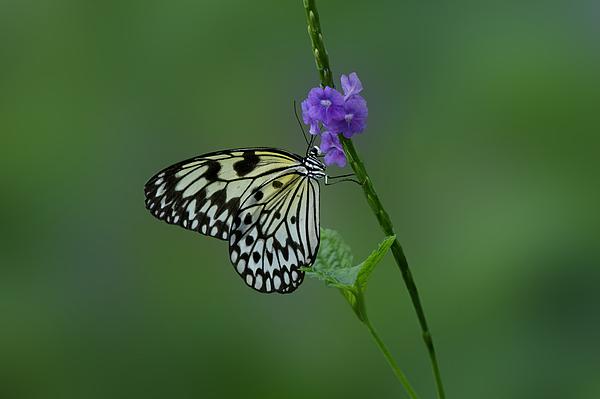 Butterfly On Flower Print by Sandy Keeton