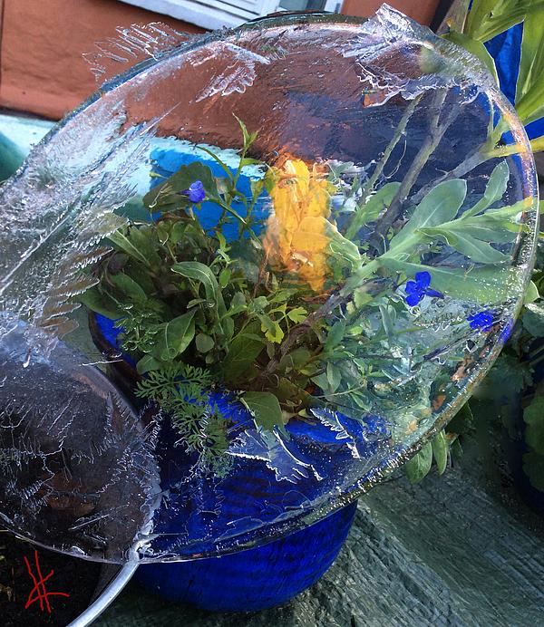 Colette V Hera  Guggenheim  -  Ice Water Experiment