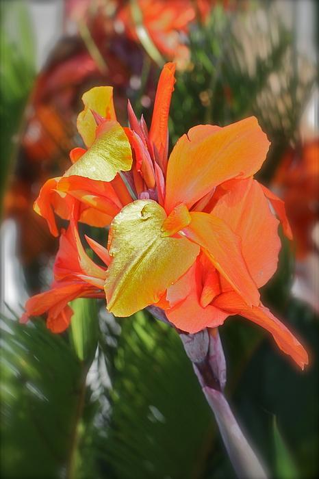 Orange Bright Print by Maureen J Haldeman