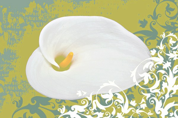 Calla Lily Print by Cathie Tyler