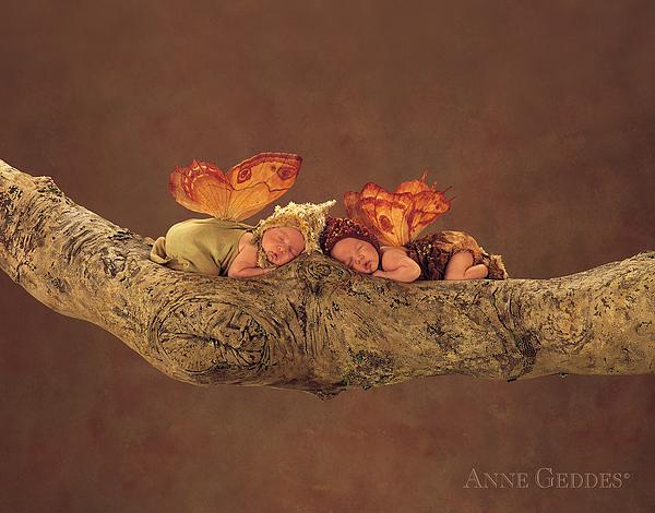 Fairies Print by Anne Geddes