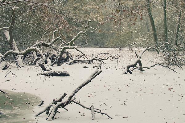 Frozen Fallen Print by Andy Smy