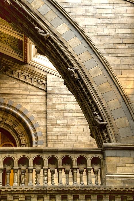 Natural History Museum Kensington Print by David French