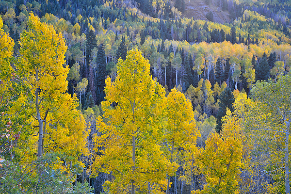 Owl Creek Pass By Ray Mathis