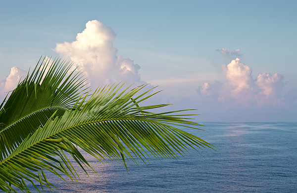 Palm And Ocean Print by Blink Images