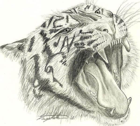 how to draw a predator animal