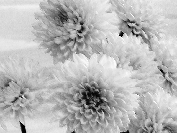 Pretty Petals Print by Marsha Heiken