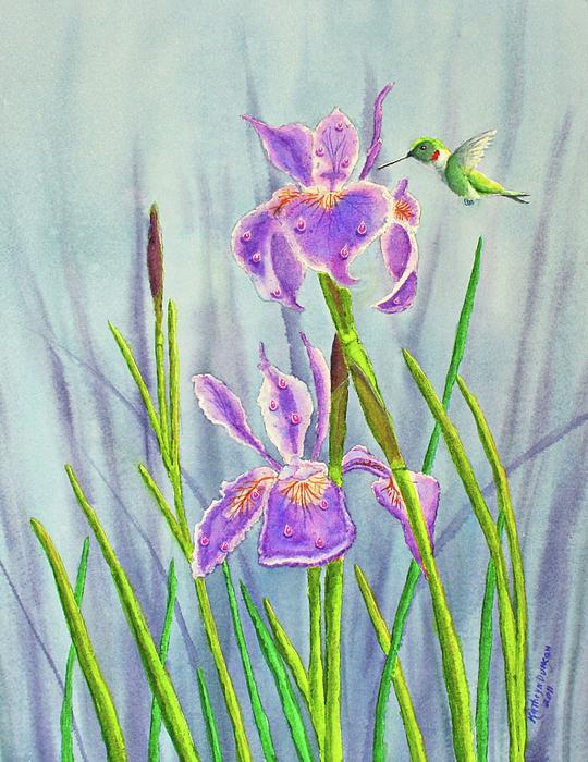 Purple Dutch Iris And Hummer Print by Kathryn Duncan