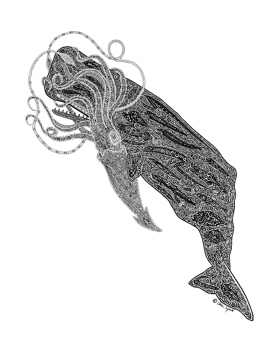 Sperm Whale And Squid Print by Carol Lynne
