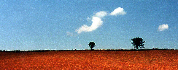 Summer Field With Two Trees 2 Ae2 Print by Lyle Crump