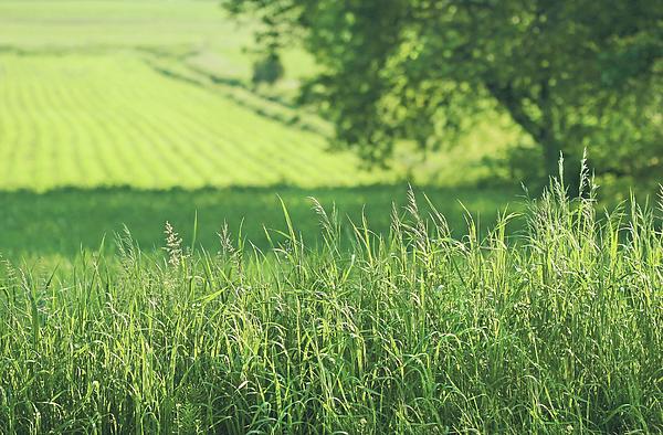 Summer Fields Of Green Print by Sandra Cunningham