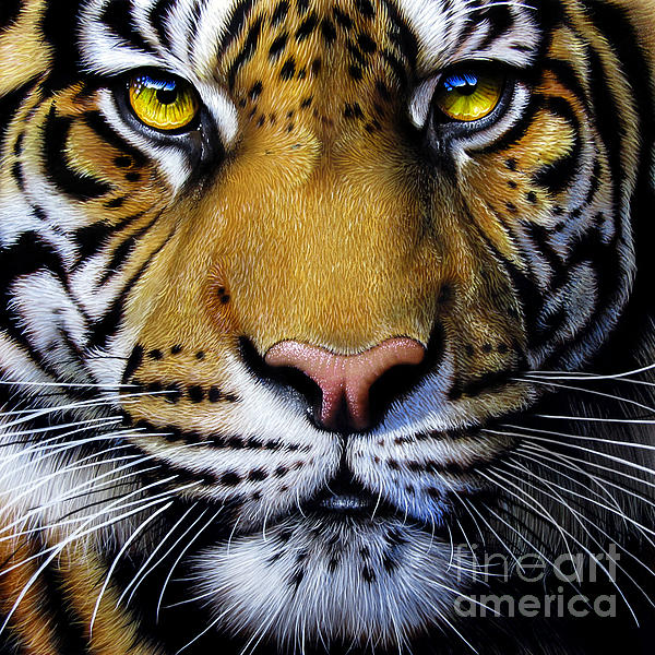 Tiger Print by Jurek Zamoyski