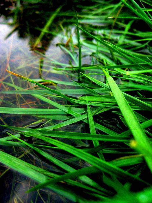 Allen n Lehman - Wet Grass