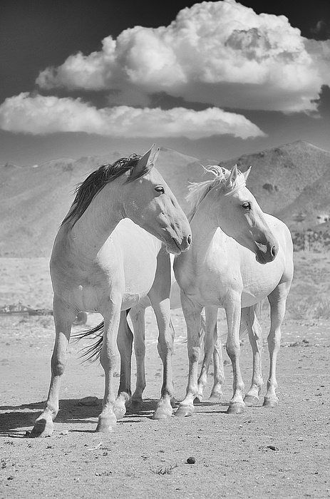 Wynema ranch wild horse sanctuary by maria jansson for Sanctuary ranch