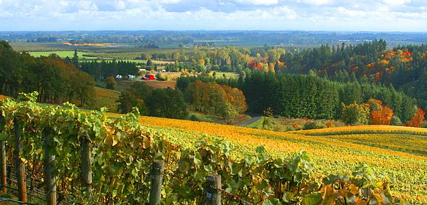 Oregon Wine Country Print by Margaret Hood