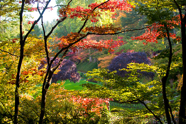 Trees in a garden butchart gardens by panoramic images for Small to medium trees for garden
