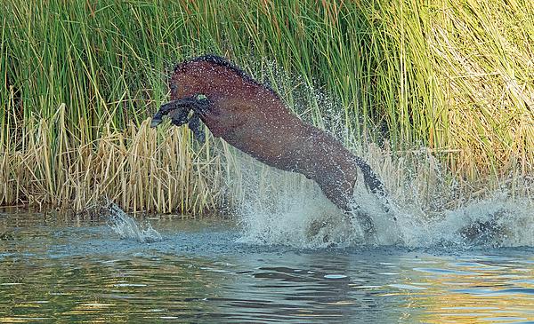 Tam Ryan - Salt River Wild Horse