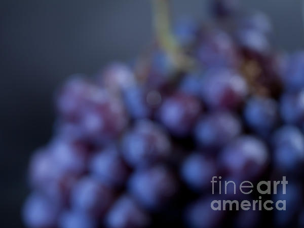 A Blue Bunch Of Grapes Print by Patricia Bainter