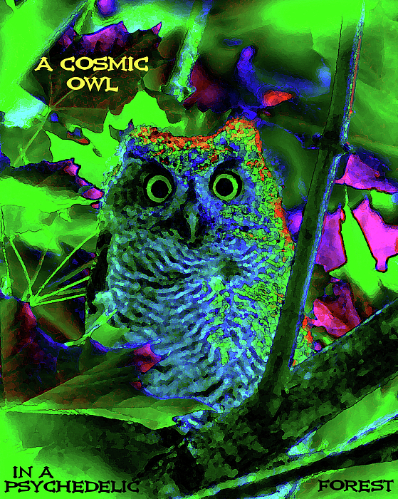 cosmic owl daubphoto - photo #36