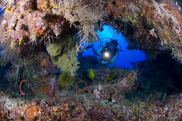 A Diver Peers Through A Coral Encrusted Print by Steve Jones