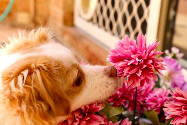 Wade Platell - A Dog