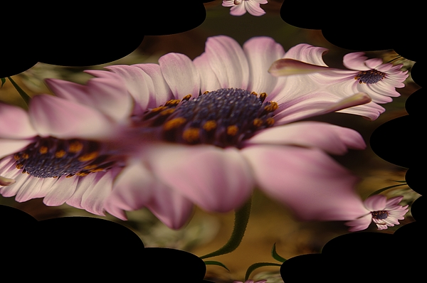 Jeff  Swan - A Fractual Flower