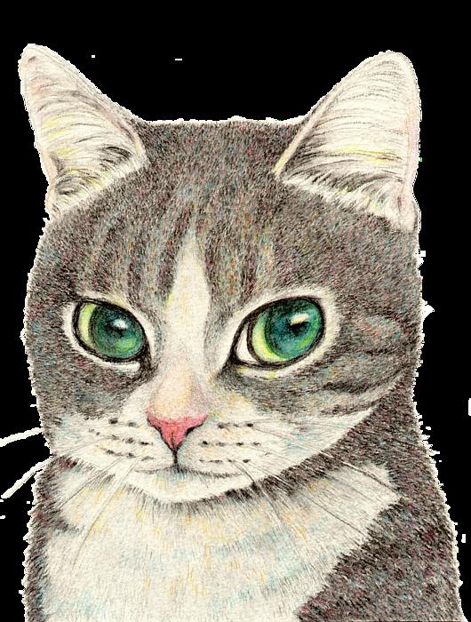Cat throwing up transparent liquid - Bowhead health ico