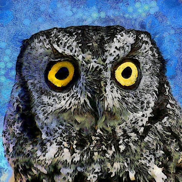 Ernie Echols - A Starry Night Owl