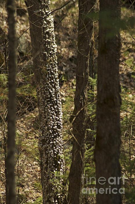 Elaine Mikkelstrup - A Walk in the Woods