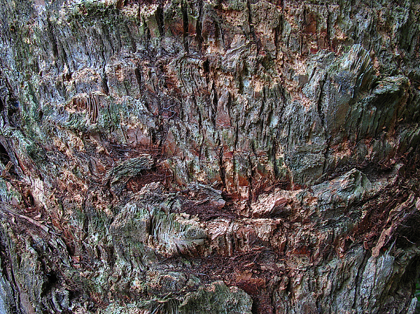 Abstract Tree Bark Print by Juergen Roth