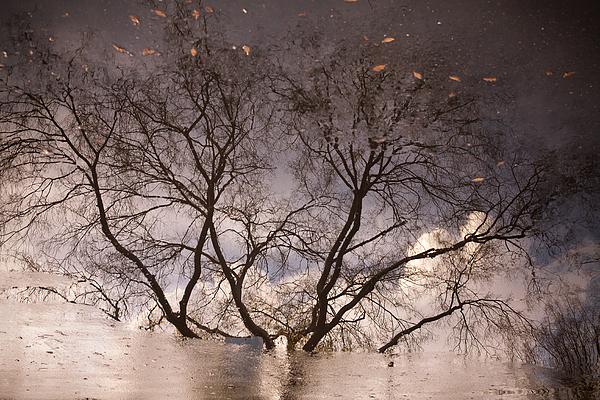 Afternoon Reflection Print by Derek Selander