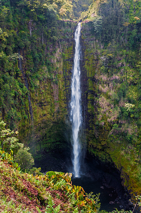 Akaka Falls - The Big Island Hawaii Print by Brian Harig