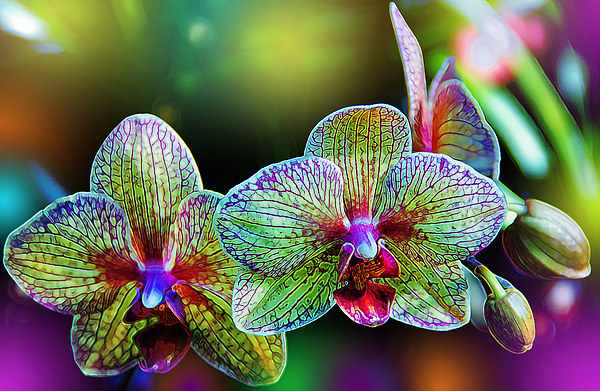 Alien Orchids Print by Bill Tiepelman