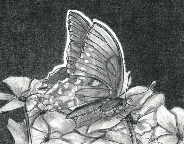 American Lady Butterfly And Impatiens Print by Joy Neasley
