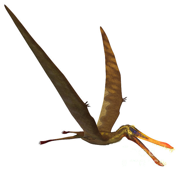 Anhanguera Pterosaur Print by Corey Ford