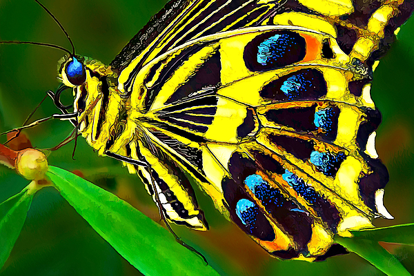 Bill Caldwell -        ABeautifulSky Photography - Anise Swallowtail Butterfly 2