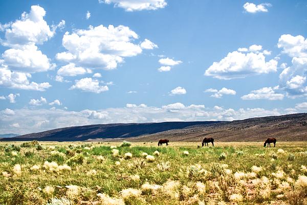 Arizona Desert Horses Print by Ryan Kelly
