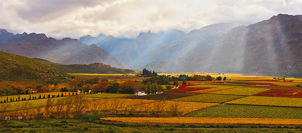 Autumn - Hex-river Valley Print by Basie Van Zyl