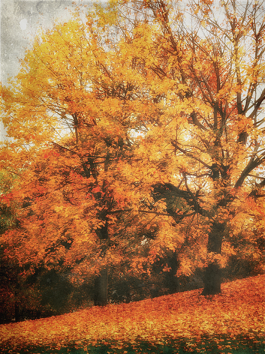Autumn Dream Print by Angela Doelling AD DESIGN Photo and PhotoArt